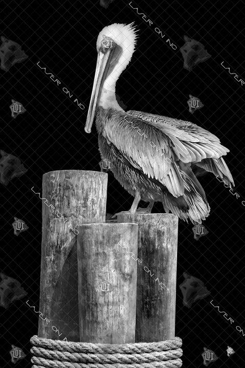 vertical-pylon-pelican-24 - Laser On Inc