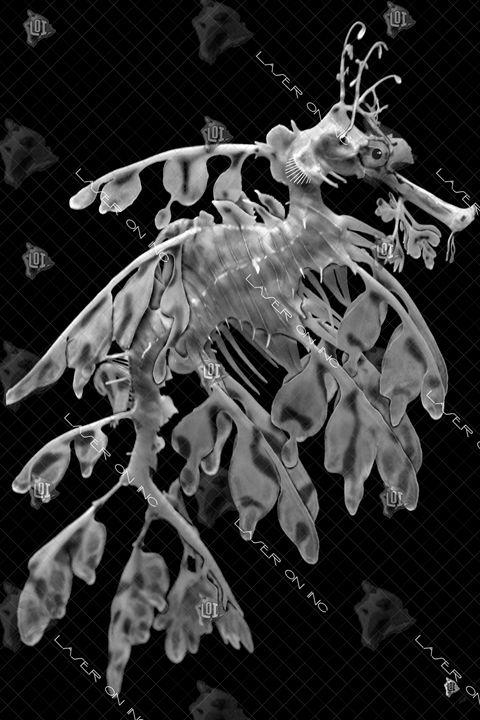 vertical-seahorse2-24 - Laser On Inc