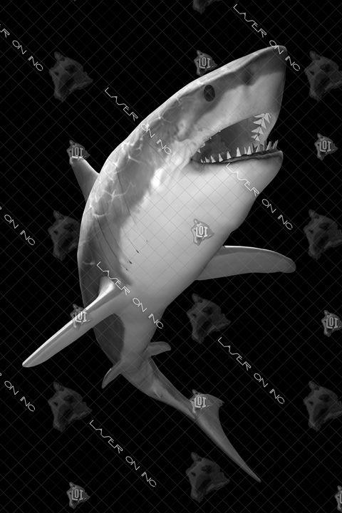 vertical-shark-hunt-24 - Laser On Inc