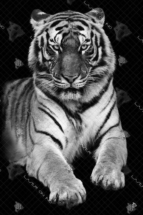 vertical-tiger-24 - Laser On Inc