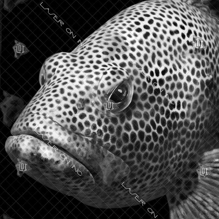 fishh3076270-12in - Laser On Inc