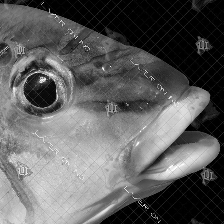 fishh11473706-12in - Laser On Inc