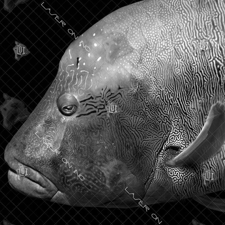 fishh12647075-12in - Laser On Inc