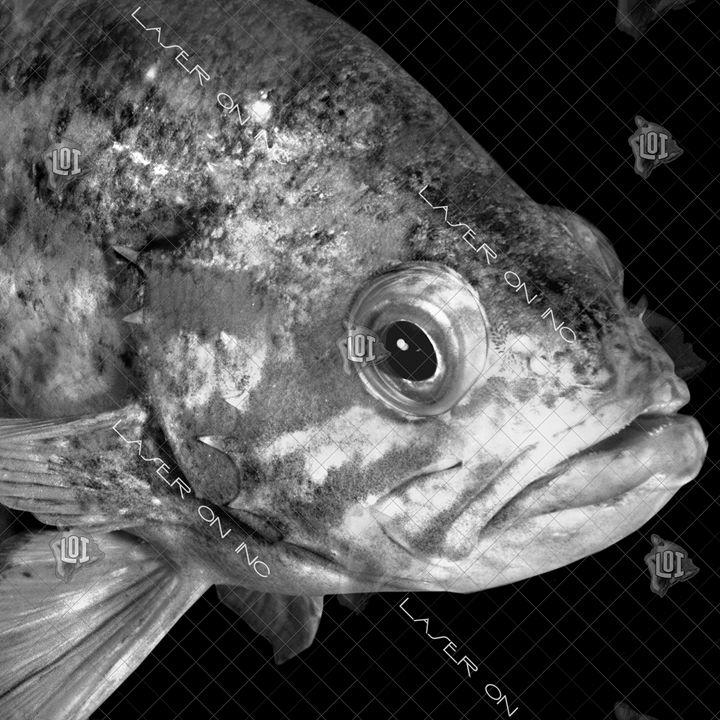 fishh20996355-12in - Laser On Inc