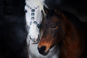 The Two Horses of Love