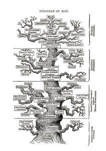 Tree of Life - Ells