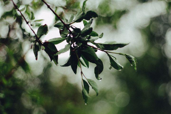 Raindrops - Sarah M. Wells