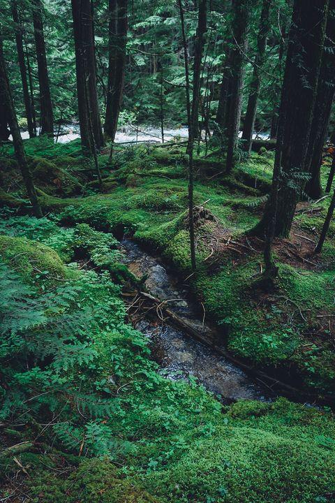 Creek - Sarah M. Wells