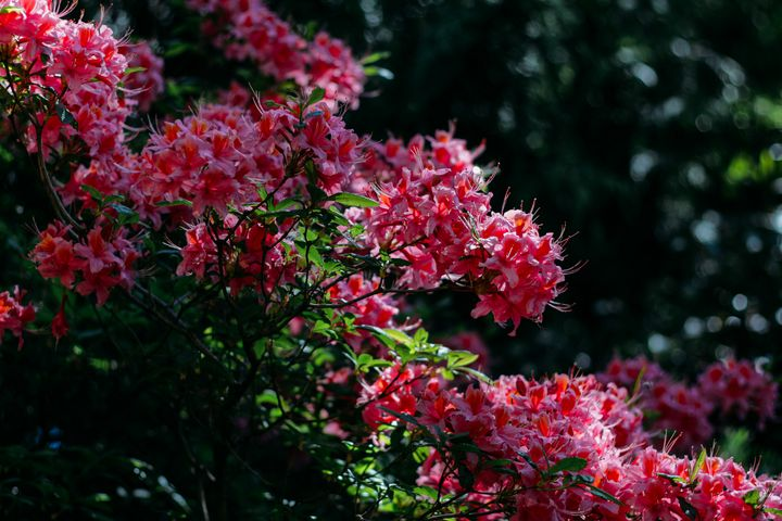 Bloom - Sarah M. Wells