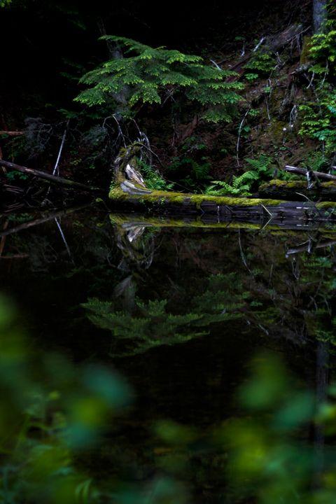 Reflection - Sarah M. Wells
