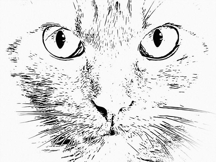 Cat face - João Bizarro