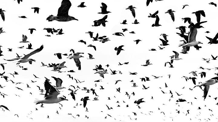 seagulls flying - João Bizarro
