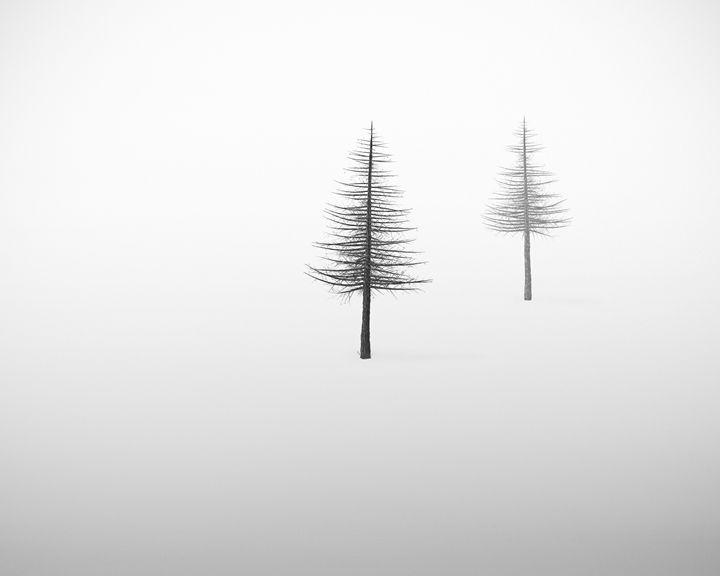 2 trees - João Bizarro