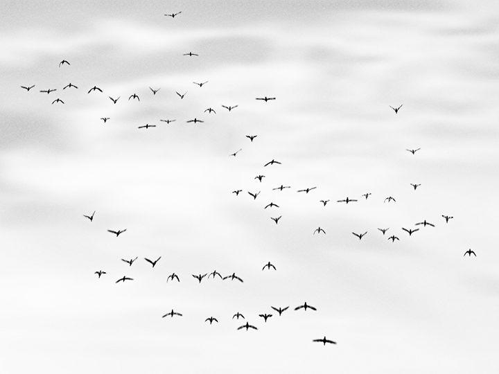 flock - João Bizarro