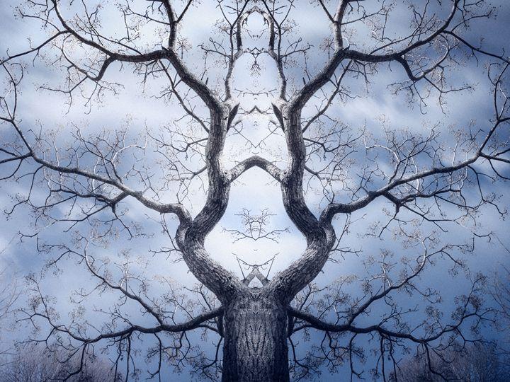 Magic Tree 4 - João Bizarro