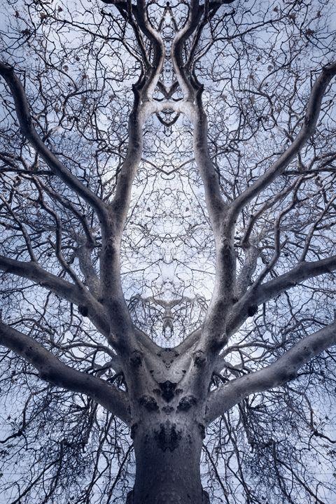 Magic Tree 2 - João Bizarro