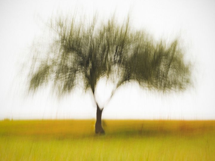 Tree of life - João Bizarro