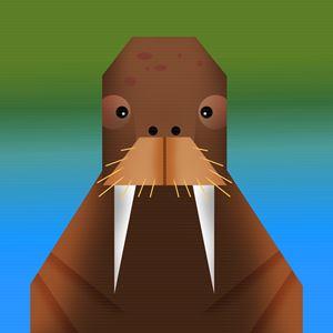 Geometrical walrus