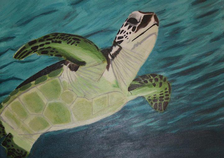 Graceful turtle - Katrina Sherman