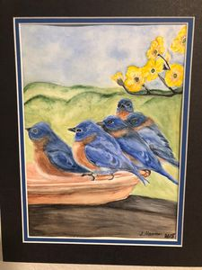 Thirsty Bluebirds