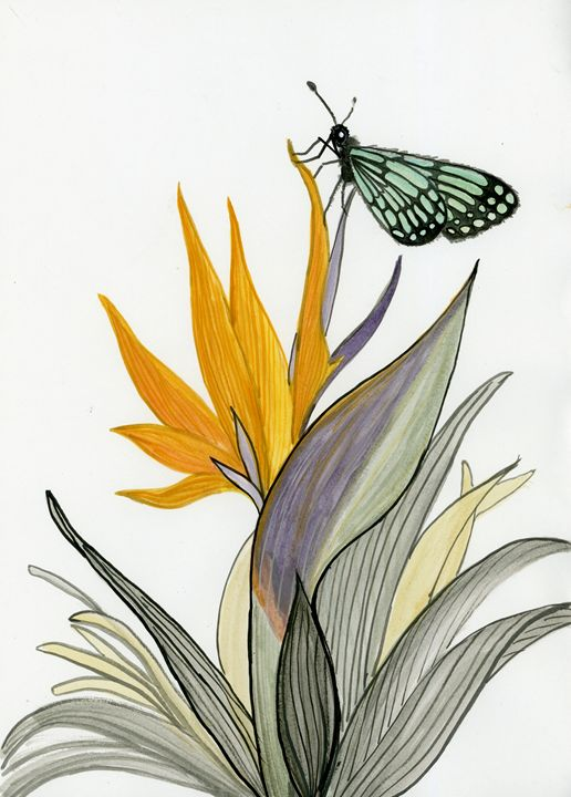 Heliconia butterfly - Sweeping Girl