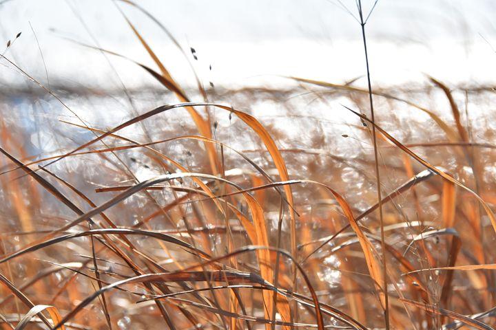 Golden Grass - Charlie Goodwin