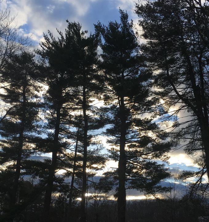 Sunset through the Pines - Tom Carlson