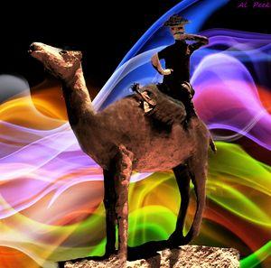 Coolgardie camel