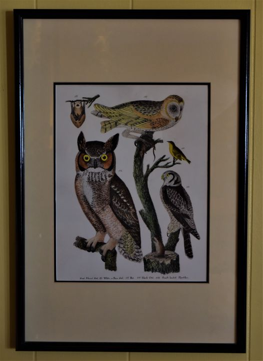 Audubon Owl & Birds Illustraion - Newbury Gallery