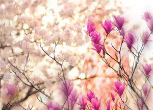 Spring Dryad