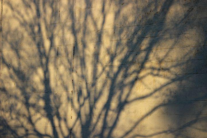 Tree Shadow - Jade Ellyette