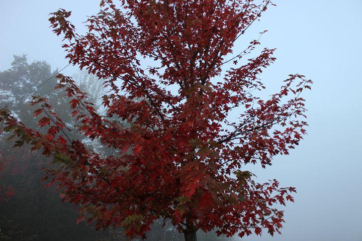 Red Tree - Jade Ellyette