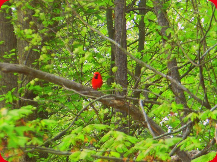 Cardinal Red - Jade Ellyette