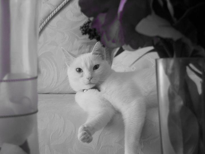 Fancy Feline - Jade Ellyette