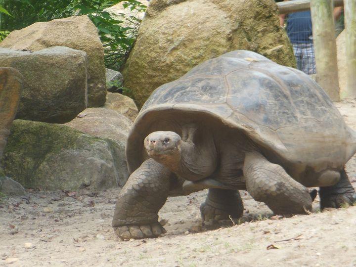 Turtle Walk - Jade Ellyette