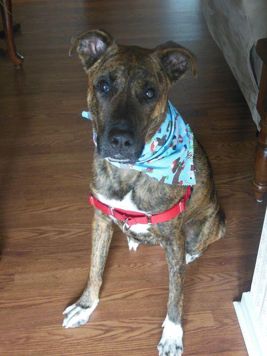 Dog For Chrismas - Jade Ellyette