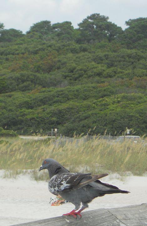 Pigeon Peak - Jade Ellyette