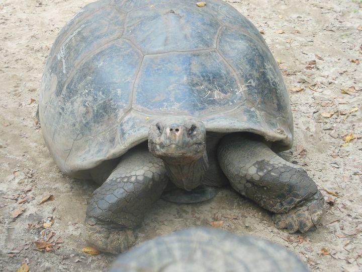 Turtle Smile - Jade Ellyette