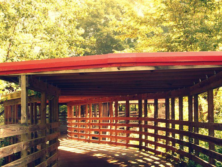 Wooden Trail - Jade Ellyette