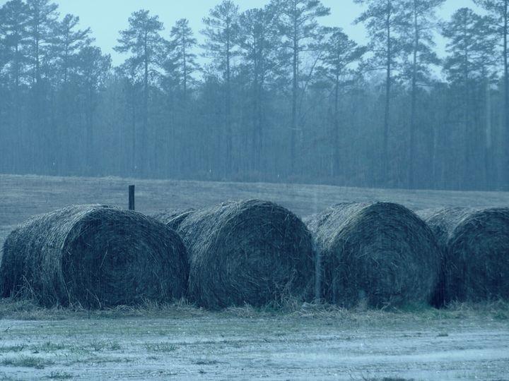 Wet Hay Barrels - Jade Ellyette