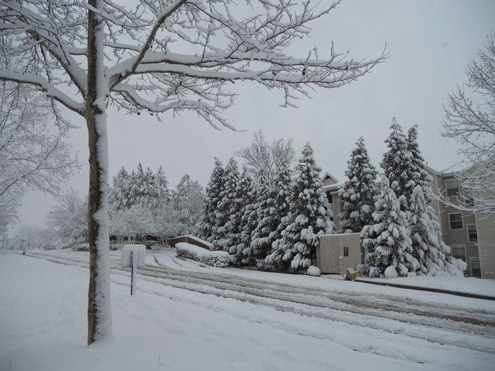 White Trees - Jade Ellyette