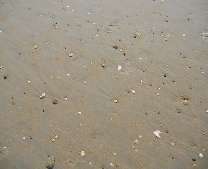 Sea Shells - Jade Ellyette
