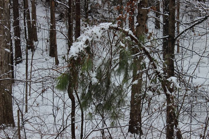 Frozen Pine - Jade Ellyette