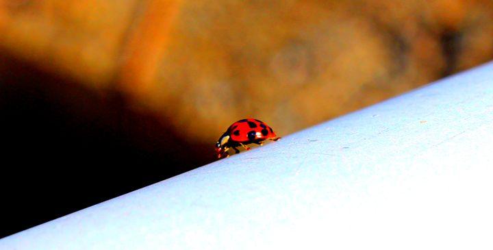 Lady Bug Stroll - Jade Ellyette