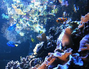 Nemo's Fish Tank