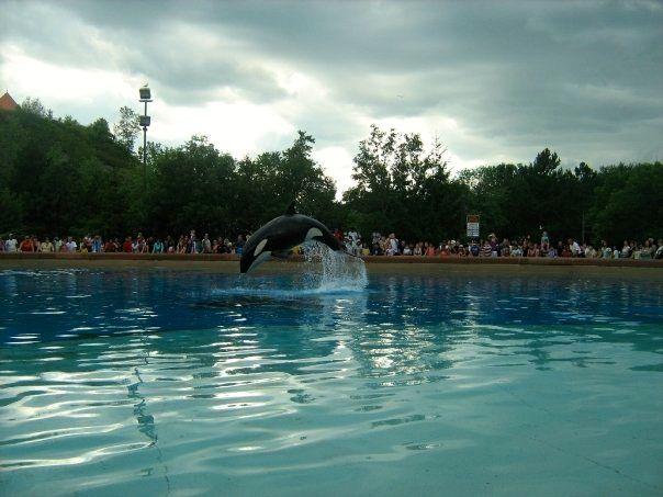 Splash - Rebecca Neddo