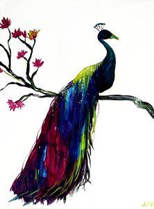 Peacock fade