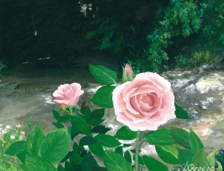Rose blooms of Adelaide - Amanda Anne