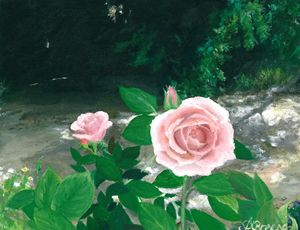 Rose blooms of Adelaide