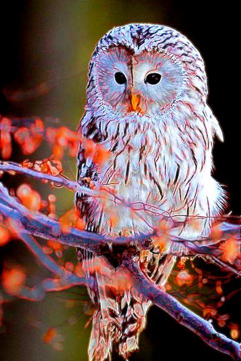 Owlright! - ArtistMichaelTodd
